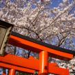 2018.03.30   山も桜満開。