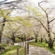 ひらはらりの桜路。