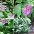 ツリフネソウの花は