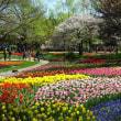 「チューリップ・ガーデン①」/昭和記念公園(2019春)