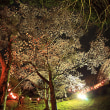 夜桜 その2