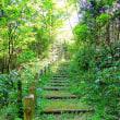 森の遊歩道(17)~3の2
