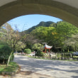 Gifu / Chrysanthenmum Flower Exhibition ( 菊花展)