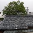今日は雨。昨日は慌ただしい一日でした