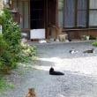 猫ちゃんクイズ。このお屋敷に猫ちゃんは何匹いるでしょう?