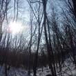 1月19日(金)苫小牧「近所の自然散歩」鳥類調査の様子