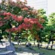 日比谷公園の紅葉・・2