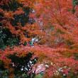 近場の紅葉