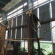 蘇州 穹窿山の万鳥園
