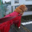 台風21号、雨にも負けず、風にも負けず散歩 !