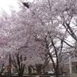 春を通り過ぎて…夏