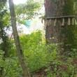 山梨県笛吹市、上芦川諏訪神社の大ケヤキ群落です!!