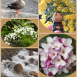 ⚘ 春の花達プラスアルファ