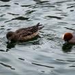 大阪城公園の水鳥と梅林の人気者