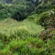 挑戦田舎暮らし 下段の休耕田の草刈りは大変!
