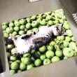岩合さんの猫たち