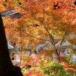 信貴山の紅葉