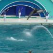 鴨川シーワールドへ「ベルーガとイルカのショー」♪その3♪