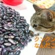 紫花豆の選別