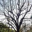 結婚記念日イブイブの冬木