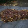 少林山 枯れ葉アート?