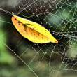 『晩秋の色』 黄葉