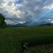 こんなようすです 6月中頃~梅雨知らず 新緑と爽やかな風