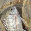 田辺湾 新庄漁協 鳥の巣魚釣場