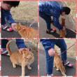 琉くんと猫さん