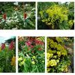 ベトナム・ホーチミン市への旅_2  -植物観察-