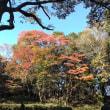 森林公園『水曜日』
