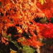 橙紅色の秋。
