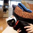 猫とサザンの日