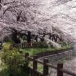 寒暖を乗り越えて咲く花吹雪