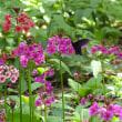 平成30年5月20日(日) 自然園で花見♪