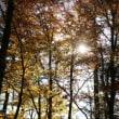 秋の山中湖旅行記(その1;真っ赤だな)