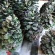 大きな松ぼっくりの下で。~クリスマスクラフト~