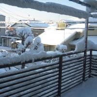 大雪の翌朝
