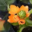 店先の小花
