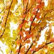 秋の気配3