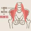 腸腰筋についての考察     金沢市   腰痛   筋トレ   整体  筋肉を鍛える