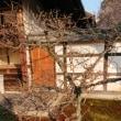「第52回 京の冬の旅・相国寺(法堂・方丈、林光院、豊光寺)」〜特別公開中の文化財が3ヶ所もある見処満載の禅寺🌠