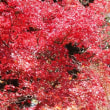 紅葉に出逢いに・・・③(環境芸術の森) 【ひで某】