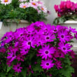 園芸店の花々 その1