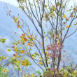 「秋雨の峠」 福島県 裏磐梯 レークラインの三湖パラダイスにて撮影!