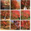 20171124 泉自然公園の紅葉02