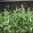 種から花へ