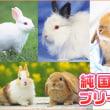 宮城県うさぎブリーダー/ネザーランドドワーフ直販店!