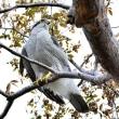 大阪城公園で鳥見