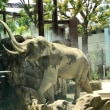 動物園  1